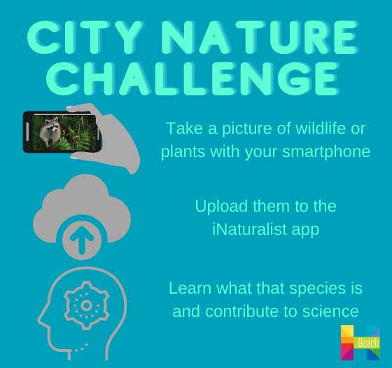 take a picture, upload to inaturalist, learn what the species is and contribute to science