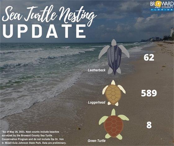 62 leatherback nests, 589 loggerhead nests, 8 green sea turtle nests so far this season